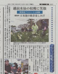 水仙狩り2017.12.18福井新聞