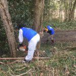 【高島RC】安曇川河川敷の桜並木清掃